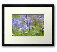 Field of bluebells  Framed Print