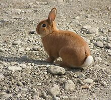 Rabbit (Leporidae) by JackzPlace
