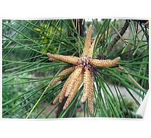 Starfish in a Tree Poster