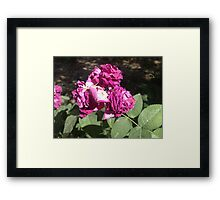 Aging of the beautiful and gifted Framed Print
