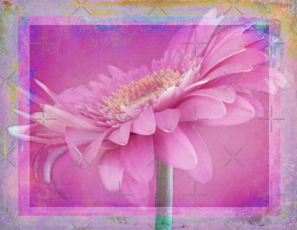 Spring Daisy by CarolM