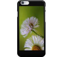 Daisys iPhone Case/Skin