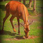 Doe, a deer.. by SoftHope