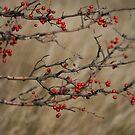 Autumnal Impression by pusztafia