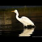 Ardea Alba - Great White Egret Eating Fish In Porpoise Channel - Stony Brook, New York by  Sophie Smith