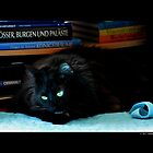 Felis Catus - Young Black Female Turkish Angora Cat Cleaning Herself by © Sophie Smith