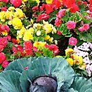Splashy colorful garden by Rachel Gagne