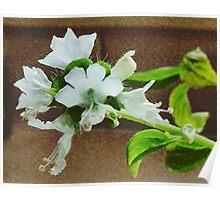 A Taste of the Basil Flower Poster