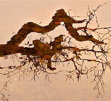 Untitled Reflection .. by Mike  Waldron