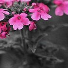 Pink & Black flowers by StudlyMuffin