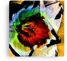 Fresco Daffodil Canvas Print