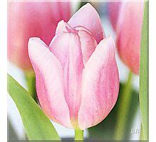 ~ Tulips ~ Photographic Print