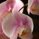 Shy Orchid by Linda Makiej
