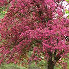 Spring Is In The Pink by lorilee
