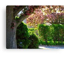 Pink blossoms adrift Canvas Print