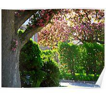 Pink blossoms adrift Poster
