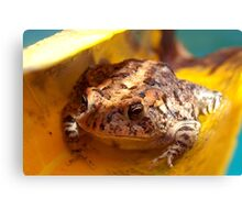 Lifeboat for a toad Canvas Print