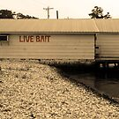 Live Bait by Bill Gamblin