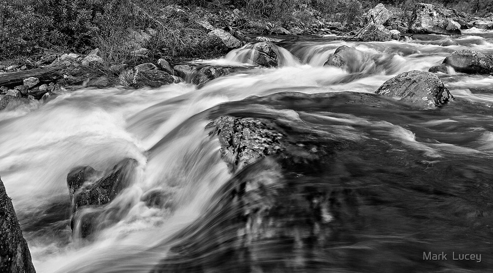 The Rivers Muscle by Mark  Lucey