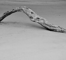 Driftwood at lowtide by ReneBohnen