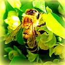 pure rich honey...like the bees bum by ©The Creative Minds