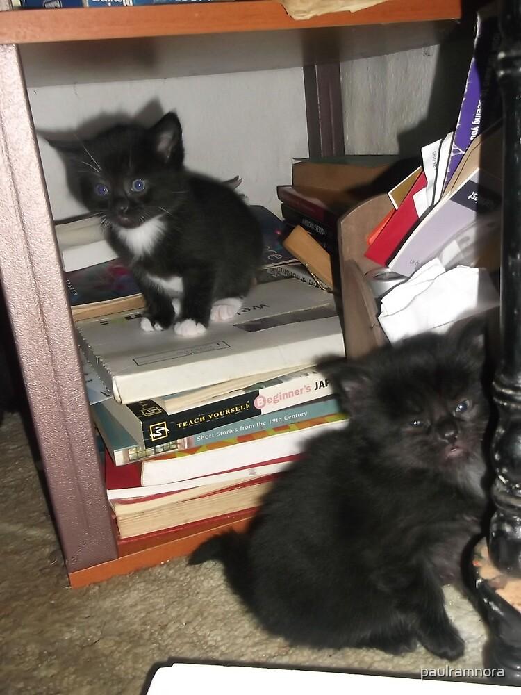 2 kittens at bookself -(180513)- Digital photo/FujiFilm FinePix AX350 by paulramnora
