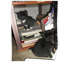 2 kittens at bookself -(180513)- Digital photo/FujiFilm FinePix AX350 Poster