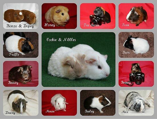 Some Members of Michaela's Mini Zoo by AnnDixon
