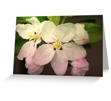 Pink / white Apple Flowers Greeting Card