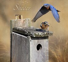 I Will Be Your Shelter by Lori Deiter