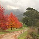 Autumn Glory - Bright - Victoria - Australia by Michael Tapping