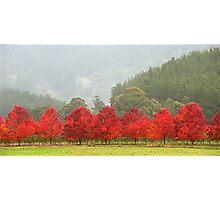True to Colour - Bright - Victoria - Australia Photographic Print