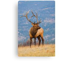 The King Of Autumn  Canvas Print