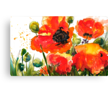 Kate's Poppys Canvas Print