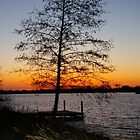 Tree by the Lake by Nixter