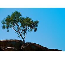 Rooted in Rock Photographic Print