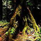 El Yunque Rainforest by Gunes Yilmaz