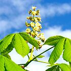 Chestnut in bloom by The Creative Minds