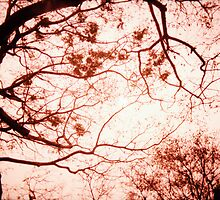 Of Trees, Leaves and Branches - Lomo by Yao Liang Chua