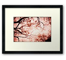 Of Trees, Leaves and Branches - Lomo Framed Print