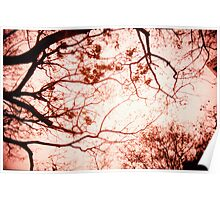 Of Trees, Leaves and Branches - Lomo Poster
