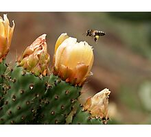 Plundered Prickly Pear Photographic Print