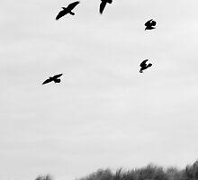 Raven Circle by BrightFogPhoto