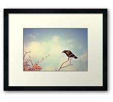 Perch Framed Print