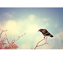 Perch Photographic Print