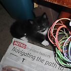 Kitten, hiding -(180512)- Digital photo/FujiFilm FinePix AX350 by paulramnora