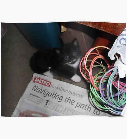 Kitten, hiding -(180512)- Digital photo/FujiFilm FinePix AX350 Poster
