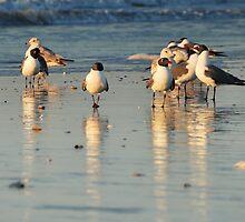 Beach Birds by JHRphotoART