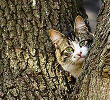 Kitten in a Tree by CopperCat