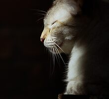 Cat in the sun by CopperCat